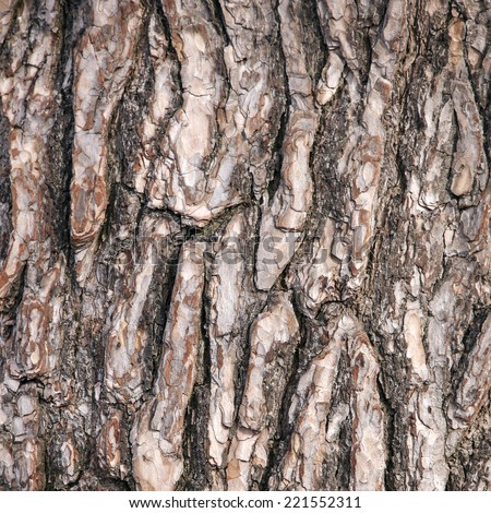 abstract pattern of rough brown bark on old pine tree - stock photo