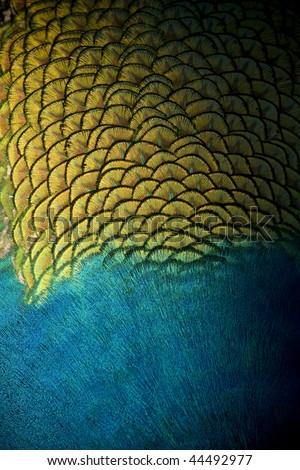 Abstract Peacock - stock photo
