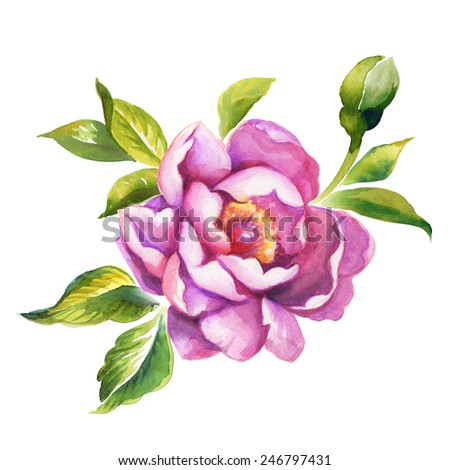 abstract peony or rose flower, floral watercolor illustration isolated on white background - stock photo
