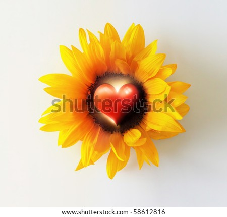 Abstract photo concept of a bright yellow sunflower with heart symbol in the stamen