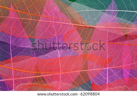 Abstract photo from skeletons of autumn leaves - stock photo