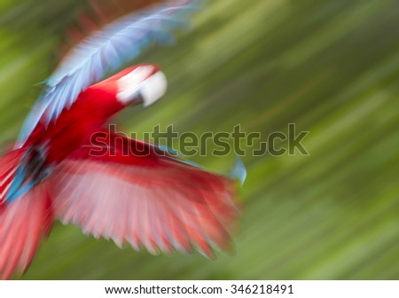 Abstract photo of flying parrot. Out of focus - stock photo