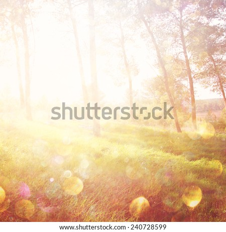 abstract photo of light burst among trees and glitter bokeh lights. image is blurred  - stock photo