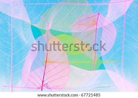 Abstract picture from skeletons of autumn leaves - stock photo