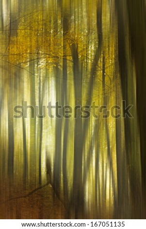 Abstract piece of art, motion photography  of an autumn forrest foliage, detail