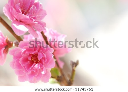 Abstract Pink Flower Blooming