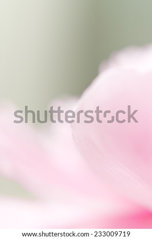 Abstract pink flower macro - stock photo