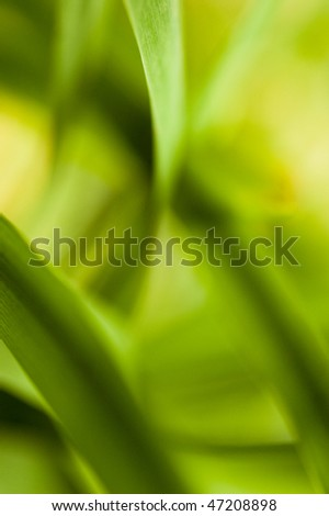 abstract plant close up shot - stock photo