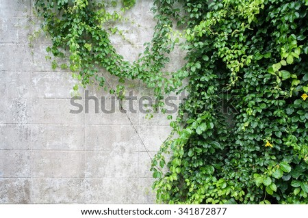 Abstract Plant Wall Background Green Creeper Stock Photo