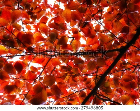 abstract red leaves pattern in autumn