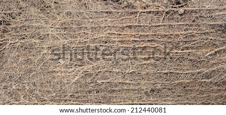 Abstract Roots of  tree Texture Background - stock photo
