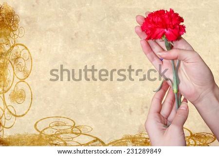 abstract scene of the flower carnation in feminine hand  - stock photo