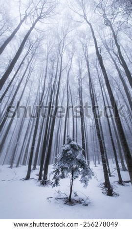 Abstract scenery with birch trees in the forest, snow and fog, in winter - stock photo