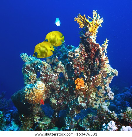 abstract shallow coral garden with glossy water surface and colorful different kind of fish floating - stock photo