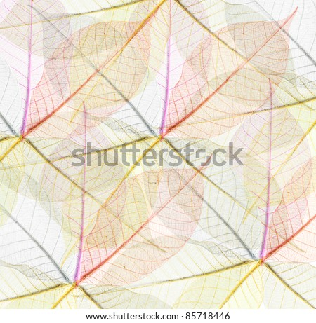 Abstract Skeletons leaves multicolor for background