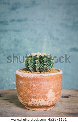 abstract small cactus with thorns in clay pots, Gymnocalycium friedrichii. vintage picture tone. - stock photo