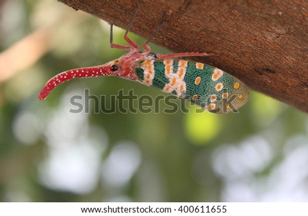 Abstract soft blurred and soft focus of ,Lanternflies ,Lantern Bugs , Fulgorid bug on the trunk and branches. - stock photo