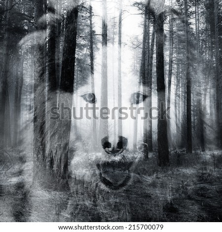 Abstract soft focused duotoned double exposure portrait of dog and black forest - stock photo