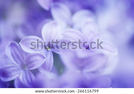 Abstract soft pastel tender floral natural background from lilac flowers - stock photo
