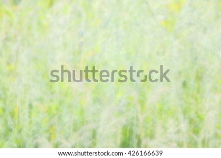 Abstract soft style background blur, natural park outdoors spring season, a bright green nature background texture with space for text or image - stock photo