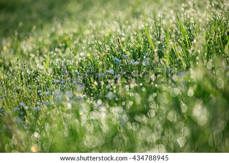 Abstract soft tender sunny floral background from forget-me-not flowers blossoming in spring time - stock photo