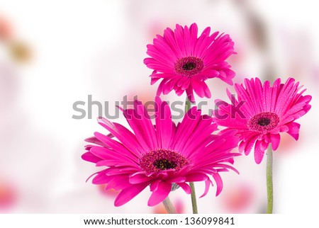 Abstract spring flower background with gerbera - stock photo