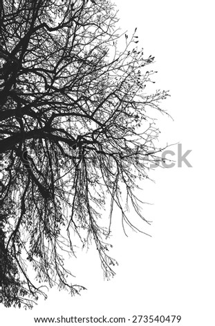 Abstract structure of tree stem in black with white background