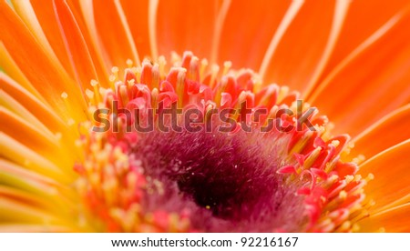 Abstract studio shot of flower detail