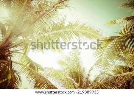 Abstract summer background in vintage style with tropical palm tree leaves at sunny day - stock photo