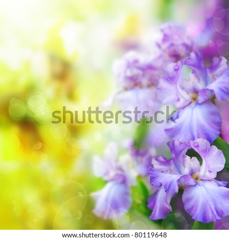 abstract summer flower Background - stock photo