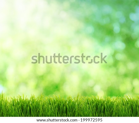 abstract summer natural background with place for your text - stock photo