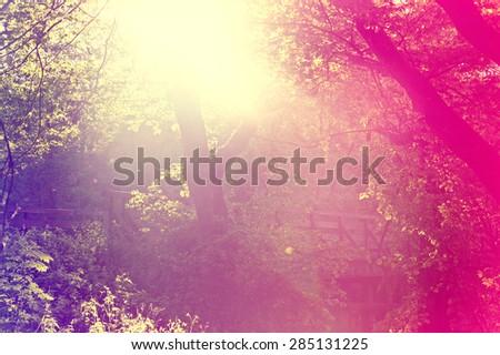 Abstract sunburst vintage summer background. Blurred instagram vintage forest. - stock photo