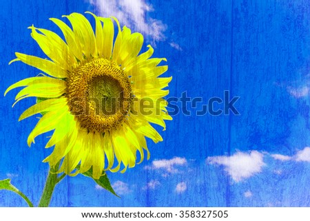 Abstract Sunflower over cloudy blue sky and bright sun lights on wood background. - stock photo