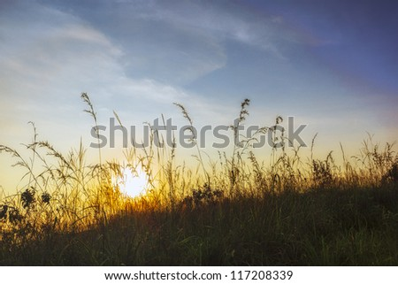 Abstract sunset on the grass mountain