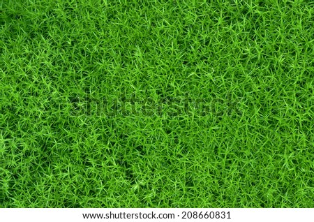 Abstract texture of green moss