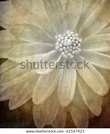 abstract textured macro image of a dahlia with vintage feel