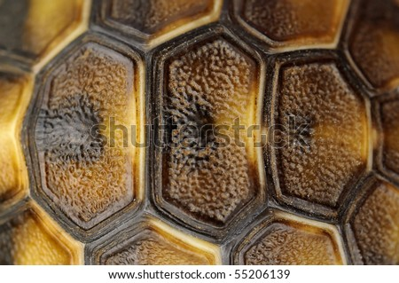 Abstract Tortoise Shell - stock photo