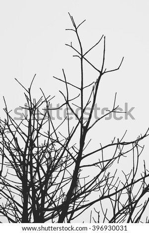 abstract Tree branch silhouette against white background - stock photo