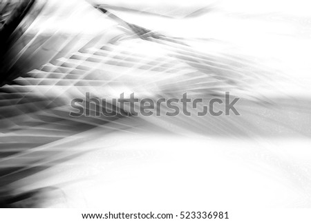 Abstract tropical palm tree in motion against light background. Dynamic nature pattern, blurred leaves in monochrome, moving in wind, for travel banner business concept blog, image with filter effect