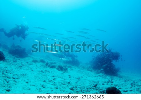 Abstract underwater scene, coral reef and group of fish. - stock photo