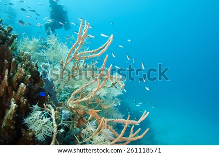 Abstract underwater scene, Coron , Palawan, Philippines. - stock photo