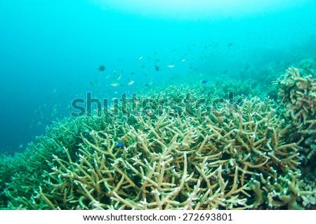 Abstract underwater scene, hard coral reef bottom. - stock photo