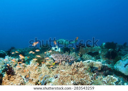 Abstract underwater scene, sea turtle and colorful coral reef. - stock photo