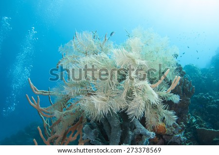 Abstract underwater scene, with coral reef. - stock photo