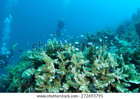 Abstract underwater scene, with divers and coral reef. - stock photo