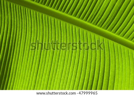 Abstract view of tropical leaf with sun shining through - stock photo