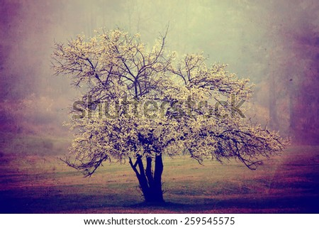 abstract vintage filtered landscape with single spring white tree and misty forest  - stock photo