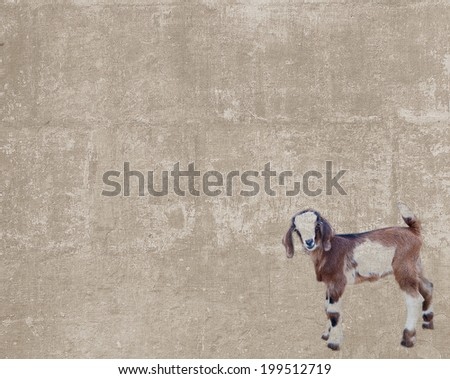 Abstract vintage textured background with a little curious goatling - stock photo