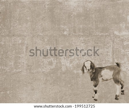Abstract vintage textured background with a little cute curious standing goatling - stock photo