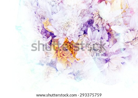 Abstract watercolor illustration of blossom chrysanthemum flower. Watercolor painting on paper. Floral watercolor illustration. - stock photo